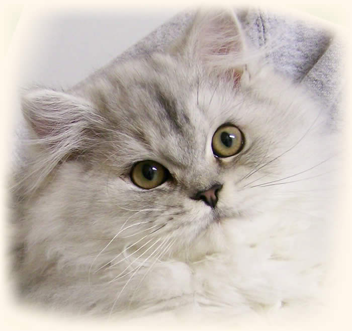 safe flea treatment for cats uk